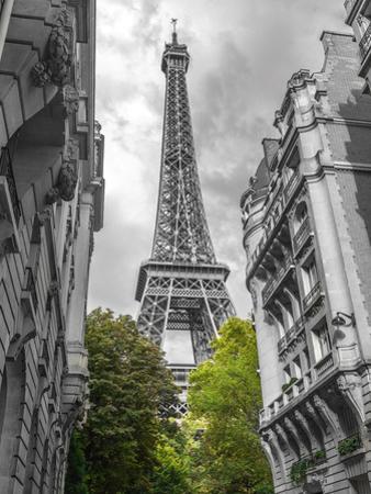 Paris my Love by Assaf Frank