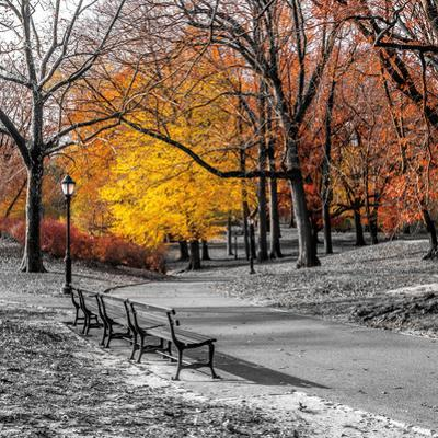 Park Pretty I by Assaf Frank