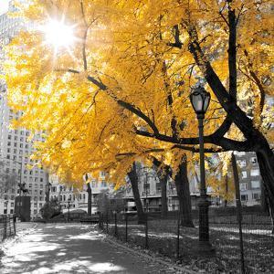 Park Pretty II by Assaf Frank