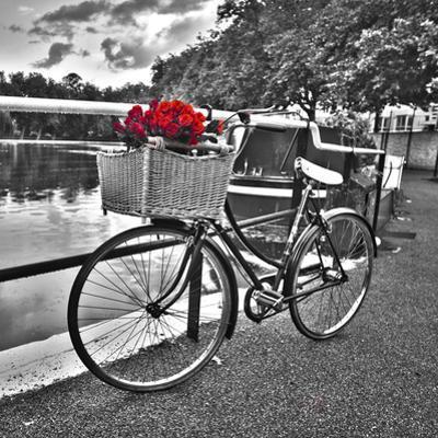 Romantic Roses I by Assaf Frank