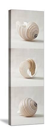 Seashell Trio I by Assaf Frank