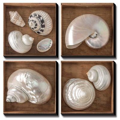 Seashells Treasures I by Assaf Frank
