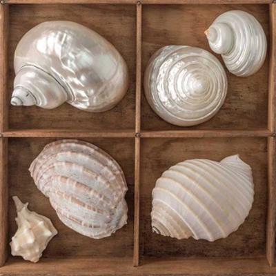 Seashells Treasures II by Assaf Frank