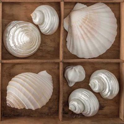 Seashells Treasures III