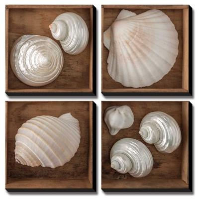 Seashells Treasures III by Assaf Frank