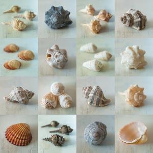Shell Life by Assaf Frank