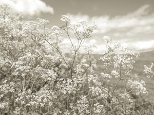 Summer Fields - Neutral by Assaf Frank