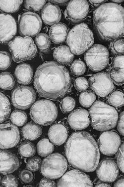 Timber Focus by Assaf Frank
