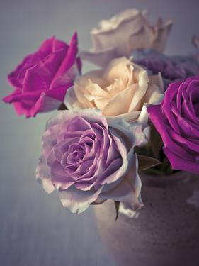 Vintage Rosa by Assaf Frank