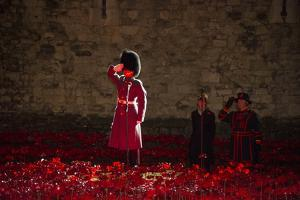 A soldier salutes in the midst of poppies at the Tower of London by Associated Newspapers