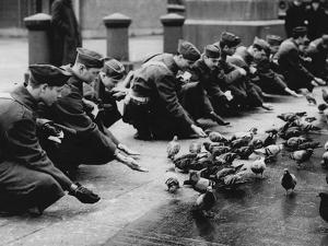American Troops Feeding Pigeons by Associated Newspapers