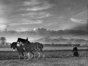Horse Ploughing by Associated Newspapers