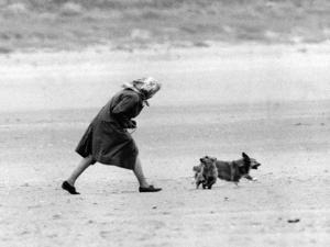 Queen Elizabeth II walking her pet corgis by Associated Newspapers