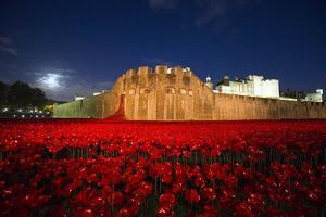 The poppy installation at the Tower of London by Associated Newspapers