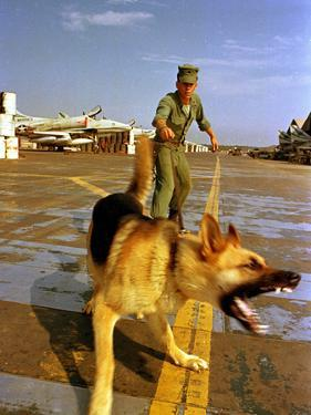 Vietnam War U.S.A.F. Guard Dog by Associated Press