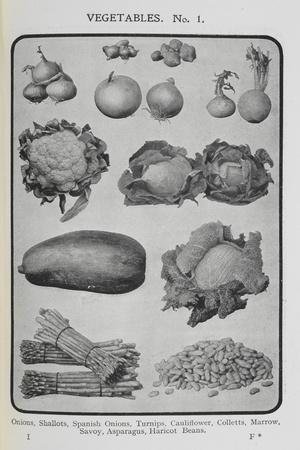 https://imgc.allpostersimages.com/img/posters/assorted-vegetables_u-L-PIXEBQ0.jpg?artPerspective=n