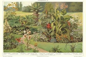 Assortment of Garden Plants