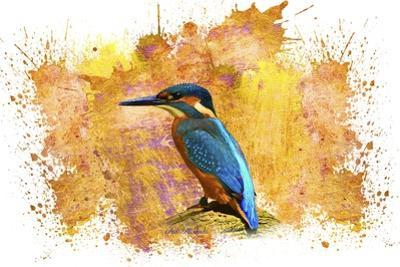 Bird Collection 2 by Ata Alishahi