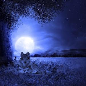 Moon Night And Wolf by Ata Alishahi