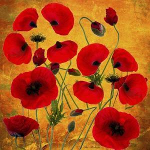 Poppy Flowers 2 by Ata Alishahi