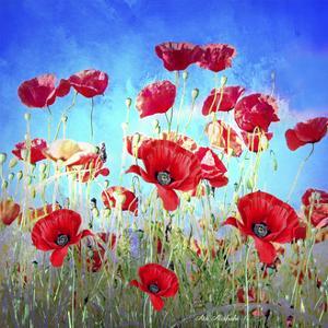 Poppy Flowers Field by Ata Alishahi