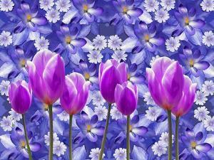 Purple Tulips by Ata Alishahi
