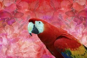 Red Parrot by Ata Alishahi