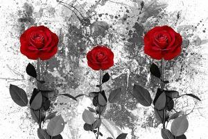 Red Roses by Ata Alishahi
