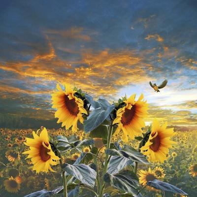Sunflower And Bird
