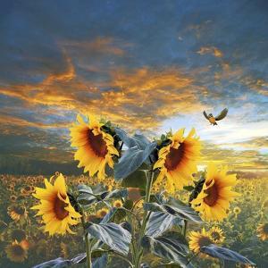 Sunflower And Bird by Ata Alishahi