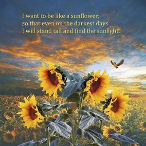 Sunflower by Ata Alishahi