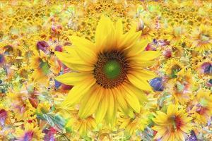 Sunflowers Are Beautiful by Ata Alishahi