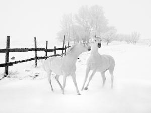 Winter Horses by Ata Alishahi
