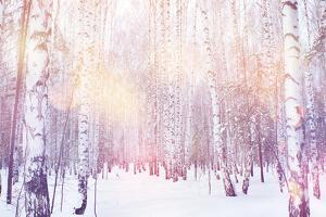 Winter Magic Birch Grove by Ataly