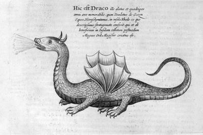 Dragon, 1678 by Athanasius Kircher