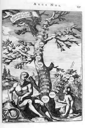 Genealogy Tree of Adam, 1675 by Athanasius Kircher