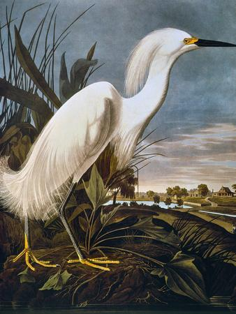 https://imgc.allpostersimages.com/img/posters/audubon-egret_u-L-PFC8A60.jpg?p=0