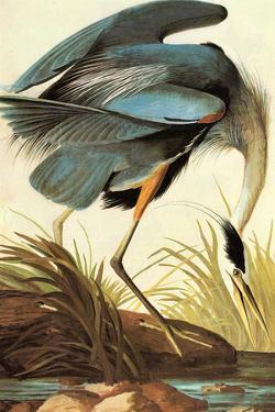 Audubon Great Blue Heron Bird