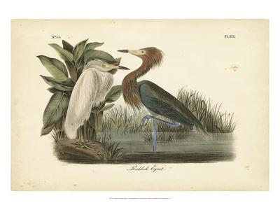 https://imgc.allpostersimages.com/img/posters/audubon-s-reddish-egret_u-L-PFR4E80.jpg?p=0