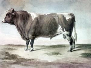 Durham Bull, 1856 by August Kollner
