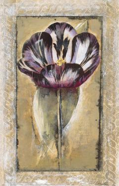 Tulipa by Augustine (Joseph Grassia)