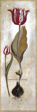 Tulipa Violoncello III by Augustine