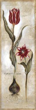 Tulipa Violoncello IV by Augustine