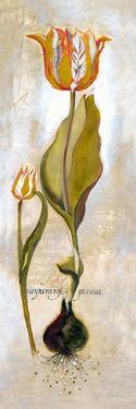 Tulipa Violoncello V by Augustine