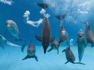 Bottlenose Dolphins Dancing and Blowing Air Underwater by Augusto Leandro Stanzani