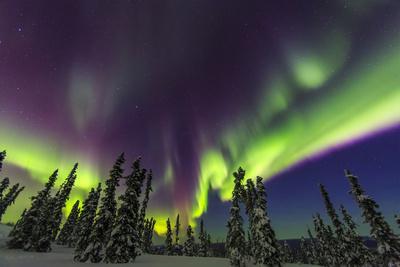 https://imgc.allpostersimages.com/img/posters/aurora-borealis-northern-lights-near-fairbanks-alaska_u-L-Q1D0DH50.jpg?p=0