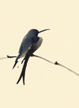 Little Bird by Aurore De La Morinrie