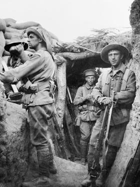 Australian Troops in the Turkish Lone Pine Trenches, 1915