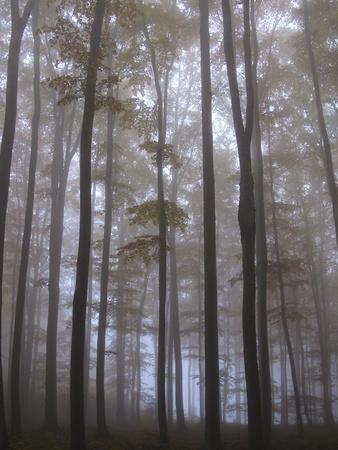 https://imgc.allpostersimages.com/img/posters/austria-lower-austria-peilstein-mountain-autumn-forest-fog_u-L-Q11YUG00.jpg?p=0