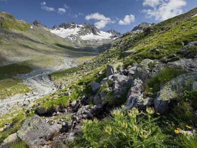 https://imgc.allpostersimages.com/img/posters/austria-tyrol-bieltal-valley-totenfeldkopf-mountain-plants-thistle_u-L-Q11YLGN0.jpg?artPerspective=n
